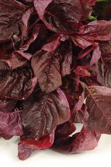 Free Amaranth Vegetable Stock Photos - 14986263