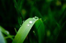 Free Fresh Vet Grass Stock Image - 14987181