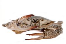 Free Crab Stock Photos - 14988033