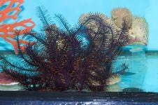 Free Sea Star In Aquarium Stock Photos - 14988263