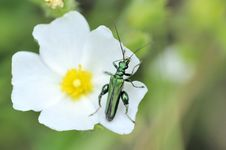 Free Green Insect On A Flower Stock Photo - 14988460