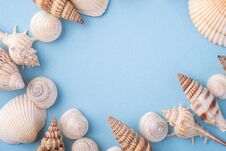 Summer Texture Copy Space Seashell Top View Blue Background Stock Photography
