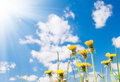 Free Dandelions Stock Images - 14994214