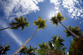 Free Palm Trees Stock Photography - 14995012
