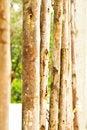 Free Log Royalty Free Stock Photos - 14999268