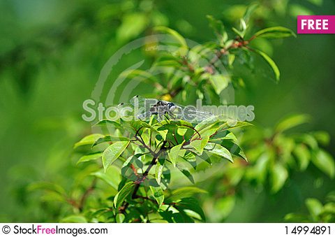 Free Yellow-Spotted Whiteface Beyond Green Leaves Stock Image - 14994891