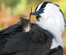 Free Tern Stock Photo - 14992680
