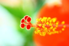 Free Beautiful Flowers Royalty Free Stock Photography - 14992747