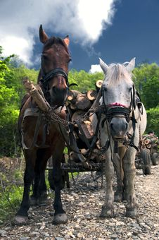 Free Two Horses Pulling A Cart Royalty Free Stock Photography - 14992827