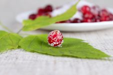 Free Green Leaf And Cowberry Sprinkled With Sugar Stock Photos - 14992933