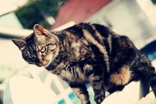 Free Tabby On A Fence Royalty Free Stock Photo - 14993195