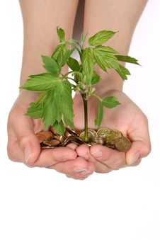 Free Female Hands With Coins And A Green Sprout Royalty Free Stock Photos - 14993348