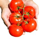 Large Ripe Tomatoes Royalty Free Stock Images