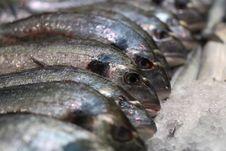 Free Frozen Fish Royalty Free Stock Photos - 14995268
