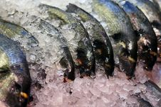 Free Frozen Fish Royalty Free Stock Photo - 14995275