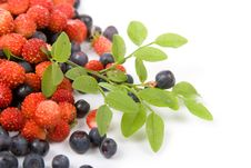 Free Wild Strawberries And Blueberries Stock Photos - 14997673