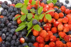 Free Wild Strawberries And Blueberries Royalty Free Stock Photography - 14997677