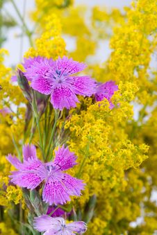 Beautiful Bouquet Of Wild Flowers Royalty Free Stock Photo