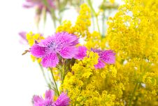 Beautiful Bouquet Of Wild Flowers Royalty Free Stock Photos