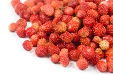 Free Wild Strawberry Stock Photos - 14997813