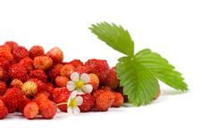 Free Wild Strawberry Royalty Free Stock Photos - 14997838