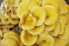 Free Mushroom Stock Image - 14998351