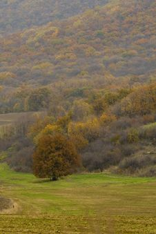 Free Yellow Landscape Near Forest Royalty Free Stock Photos - 14998378