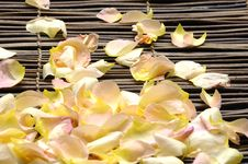 Free Petals Royalty Free Stock Images - 14998439