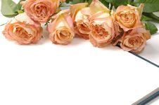 Free Rose Stock Images - 14999144