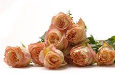 Free Rose Royalty Free Stock Image - 14999176
