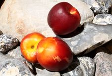 Free Nectarines On Baltic Stones Royalty Free Stock Images - 14999819