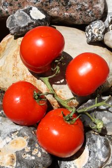 Free Fresh Tomatoes On Stones Stock Images - 14999854