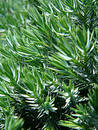 Free Green Plant Royalty Free Stock Image - 152506