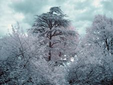 Free Infrared Trees Stock Image - 150941