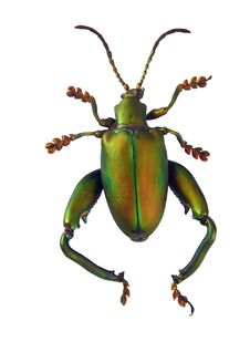 Free Matte Green Beetle Stock Images - 153104