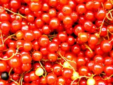 Free Currants 1 Stock Image - 155191