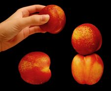 Free Stacking Nectarines Royalty Free Stock Photos - 155368