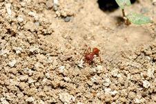 Free Ant Heading Out Stock Image - 157071