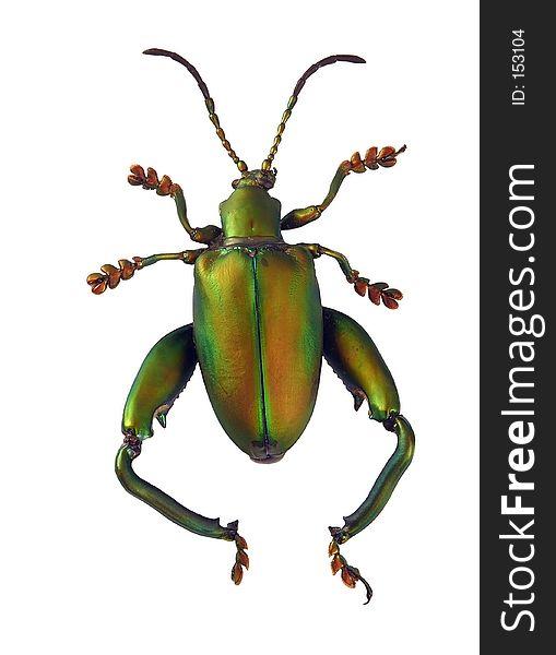 Matte Green Beetle