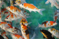 Free Fishes Stock Photo - 1504320