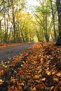 Free Autumn Scenery Royalty Free Stock Image - 1505066