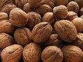Free Nut Royalty Free Stock Image - 1505506