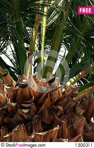 Bark of palm-tree Stock Photo
