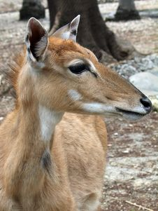 Free Deer Profile Royalty Free Stock Images - 1501769