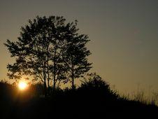 Sunrise Tree Stock Photography