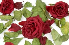 Free Red Rose Petals Royalty Free Stock Photography - 1503217