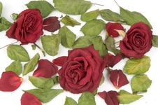 Free Red Rose Petals Stock Photo - 1503280