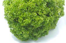 Free Green Parsley Closeup Stock Photo - 1503380