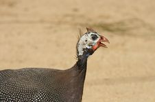 Free Strange Bird Stock Images - 1503694
