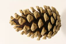 Free Fir Cone Stock Photography - 1504832